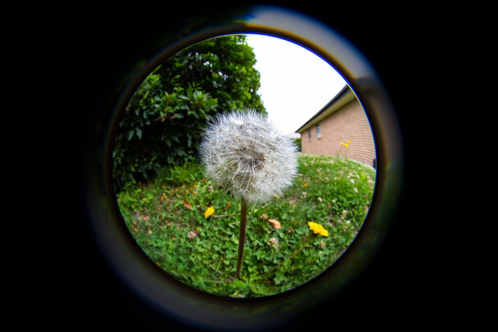 LensBaby 5.6mm Circular fisheye
